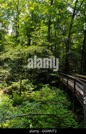 CONGAREE NATIONAL PARK is known for its pristine natural environment - SOUTH, CAROLINA - Stock Photo