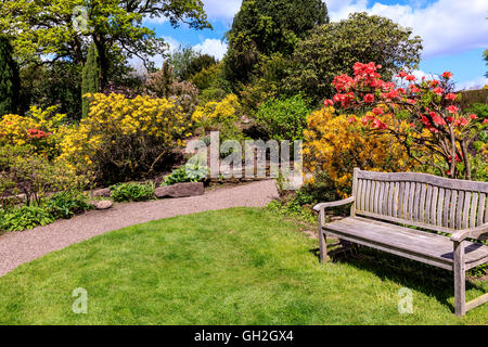 Spring garden with pink and yellow flowering shrubs and a wooden bench. - Stock Photo
