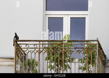 Pigeon bird sitting in the old balcony. - Stock Photo