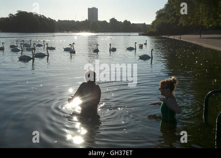 Serpentine Lido Hyde park Lake London Uk. Swimming with swans. HOMER SYKES - Stock Photo