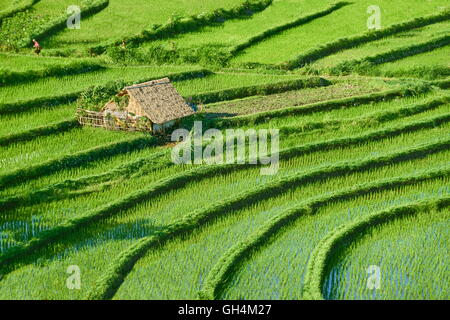 Rice Terraces Field, Bali, Indonesia - Stock Photo