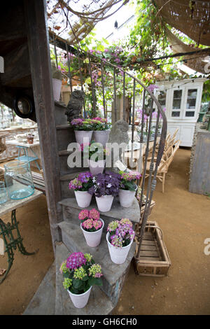 Petersham Nurseries, Richmond Upon Thames, greenhouses selling chic garden and home accessories, London Borough - Stock Photo
