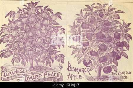 Childs rare flowers, vegetables, and fruits (1896) - Stock Photo