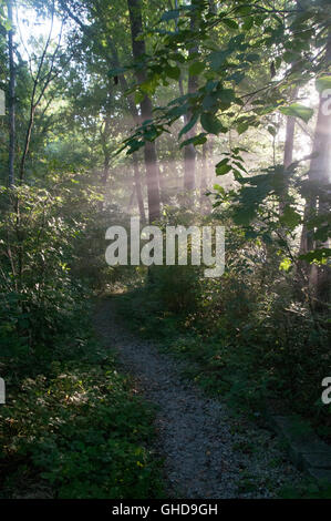 Pathway in trees of a forest by a river with misty rays of early morning sunlight streaming through the branches. - Stock Photo