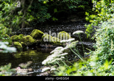A moss covered rocks in the river Almond, Livingston, West Lothian, Scotland - Stock Photo