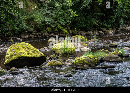 Moss covered rocks in the river Almond, West Lothian, Scotland - Stock Photo