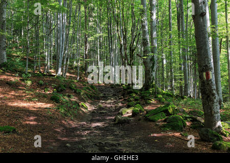 Marked path through the forest in summer Romania - Stock Photo