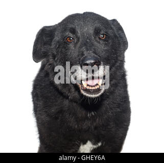 Portrait of a stray dog, isolated on white - Stock Photo