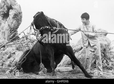 THE BLACK STALLION USA 1979 Carroll Ballard Alec Ramsey (KELLY RENO) whose life was saved by a horse in a shipwreck, - Stock Photo