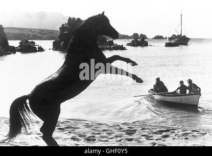 THE BLACK STALLION USA 1979 Carroll Ballard Rearing angrily on the beach, The Black expresses his dismay at having - Stock Photo