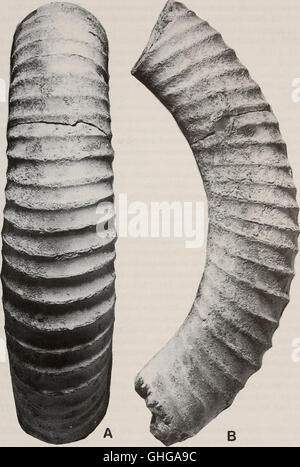 Annals of the South African Museum - Annale van die Suid-Afrikaanse Museum (2003) - Stock Photo