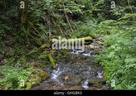 Small river through a dense forest - Stock Photo