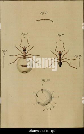 Bulletin de l'Académie Royale des Sciences, des Lettres et des Beaux-Arts de Belgique (1838) - Stock Photo