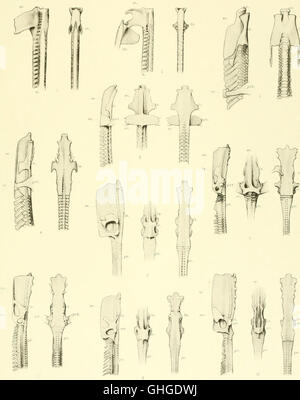 Memoirs of the Museum of Comparative Zoölogy, at Harvard College, Cambridge, Mass (1913) - Stock Photo