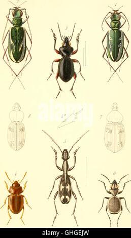 Annales de la Société entomologique de France - Stock Photo