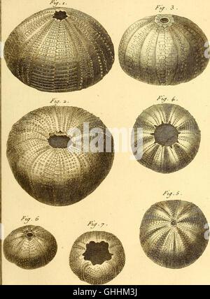 Tableau encyclopédique et méthodique des trois règnes de la nature (1791) - Stock Photo