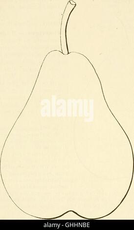 Dictionnaire de pomologie, contenant l'histoire, la description, la figure des fruits anciens et des fruits modernes - Stock Photo