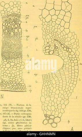 Bulletin biologique de la France et de la Belgique (1904) - Stock Photo