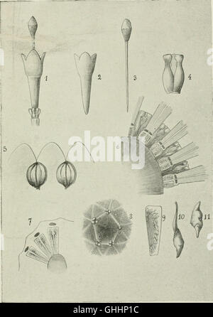 Bulletin du Musum national d'histoire naturelle ((1895-1970)) - Stock Photo