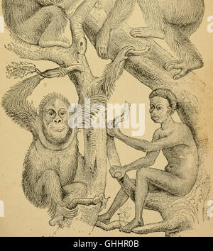 The evolution of man - a popular exposition of the principal points of human ontogeny and phylogeny (1879) - Stock Photo