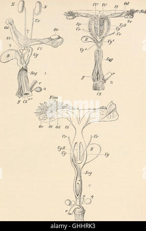 Comparative anatomy of vertebrates (1907) - Stock Photo