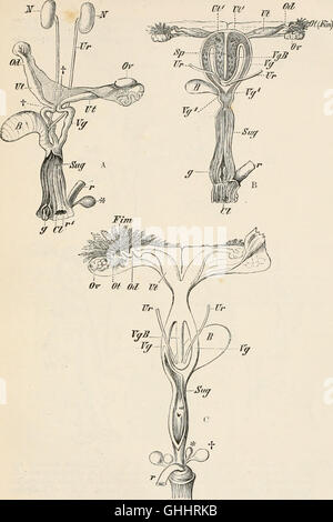 Elements of the comparative anatomy of vertebrates (1886) - Stock Photo