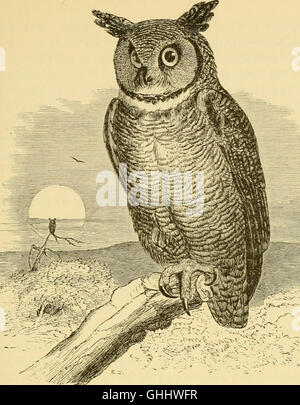 A popular handbook of the ornithology of the United States and Canada, based on Nuttall's Manual (1891) - Stock Photo