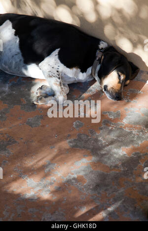 Jack Russell Sleeping on Porch - Stock Photo