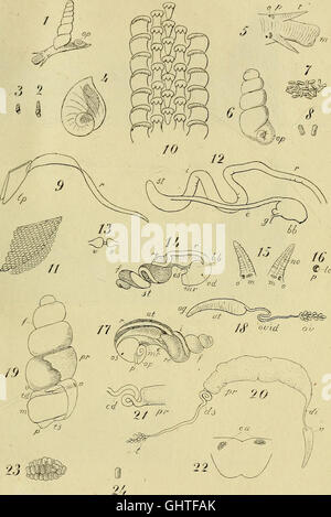 Atti della Societitaliana di scienze naturali (1870) - Stock Photo