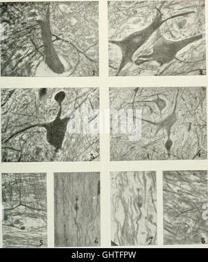 Atti della Societtaliana di scienze naturali e del Museo civico di storia naturale di Milano (1911) - Stock Photo