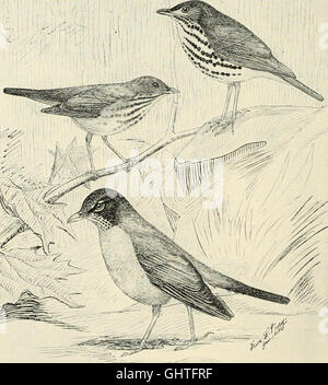 The birds of Illinois and Wisconsin (1909) - Stock Photo