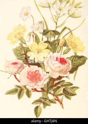 The language of flowers, or, Floral emblems of thoughts, feelings, and sentiments (1869) - Stock Photo