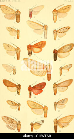 Catalogue of the Lepidoptera Phalænæ in the British museum (1898) - Stock Photo