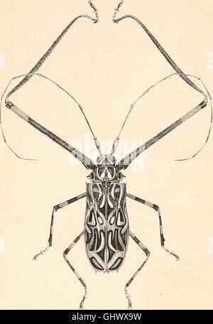 Encyclopédie d'histoire naturelle; ou, Traité complet de cette science d'après les travaux des naturalistes les - Stock Photo