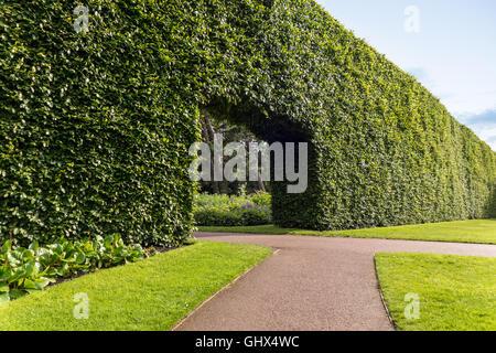 Edinburgh Royal Botanic Garden RBGE. Famous century-old Beech Hedge 8 meters; 23ft high. - Stock Photo