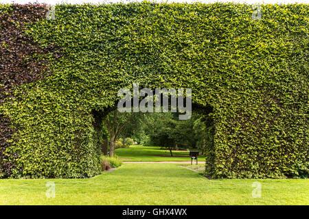 Royal Botanic Garden Edinburgh RBGE. Famous century-old Beech Hedge 8 meters; 23ft high. - Stock Photo