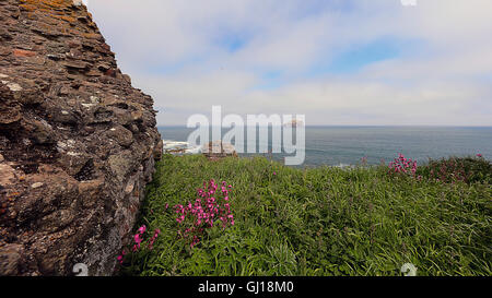 Bass Rock from Tantallon Castle. North Berwick - Stock Photo