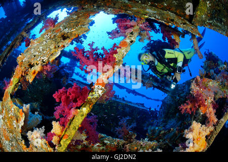 Shipwreck Aida and scuba diver inside the Wreck and soft coral, Brother Islands, Big Brother, Red Sea, Egypt - Stock Photo