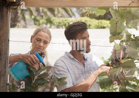 Mature couple in garden, tending to growing plants - Stock Photo