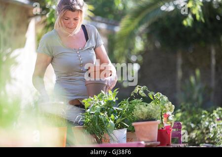 Woman tending plants in garden - Stock Photo