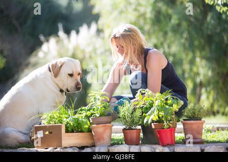 Labrador dog watching woman tending plants in garden - Stock Photo