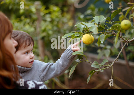 Mother and daughter looking at lemons on tree - Stock Photo