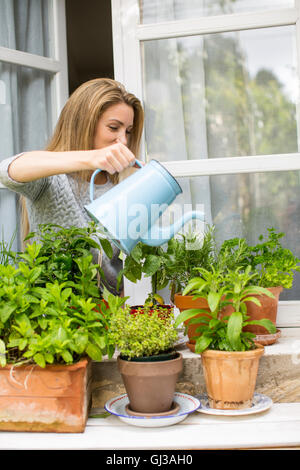 Woman watering herb plants on windowsill - Stock Photo