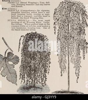 Descriptive catalogue of fruit and ornamental trees, evergreens, grape vines, shrubs, bulbs, etc. (1889) - Stock Photo