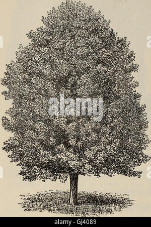 Descriptive and illustrated catalogue of fruit and ornamental trees, shrubs, plants (1900) - Stock Photo