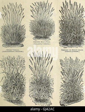 Illustrated hand book - Rawson's vegetable and flower seeds - W.W. Rawson and Co. (1895) - Stock Photo
