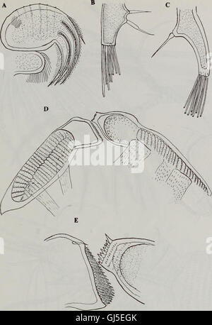 Bulletin of the Natural History Museum Zoology (1998) - Stock Photo