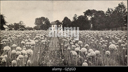 Beckert's seed store - vegetable seeds flower bulbs (1929) - Stock Photo