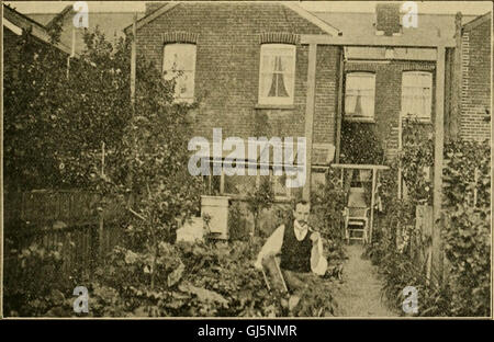 British bee journal and bee-keepers adviser (1908) - Stock Photo