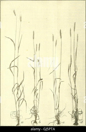Bulletin of the U.S. Department of Agriculture (1920) - Stock Photo